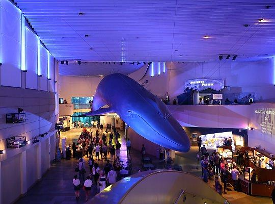 Blue Whale Night Dive Jpg Slideshow