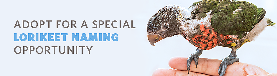Adopt for a special lorikeet naming opportunity - banner