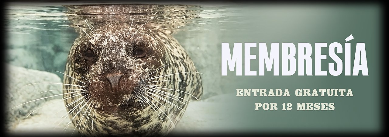Membresia at the Aquarium - banner