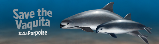 Help save the vaquita - popup