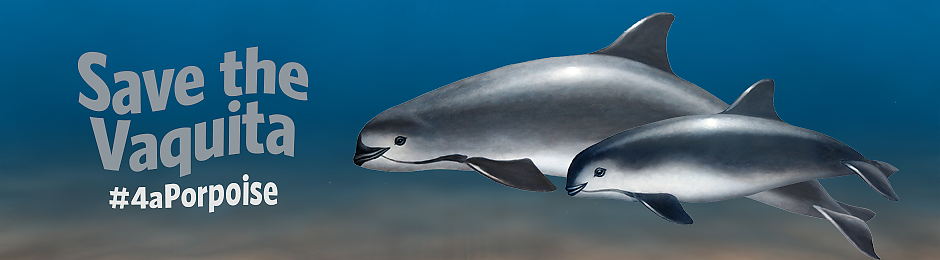 Help save the vaquita - banner