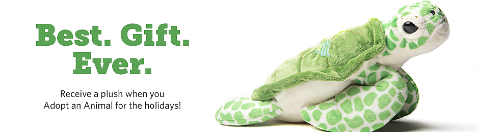 Best. Gift. Ever. Receive a plush when you adopt an animal for the holidays. - banner