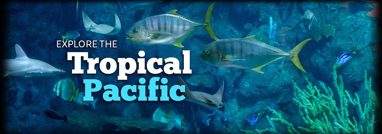 Tropical_Pacific_banner3.jpg - banner