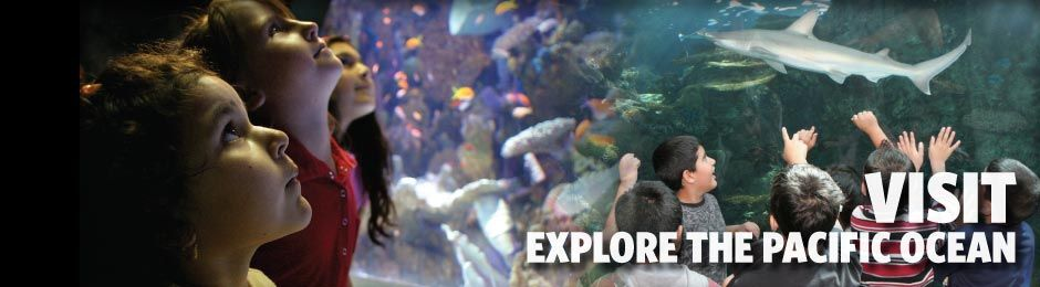 Visit and Explore the Pacific Ocean - banner