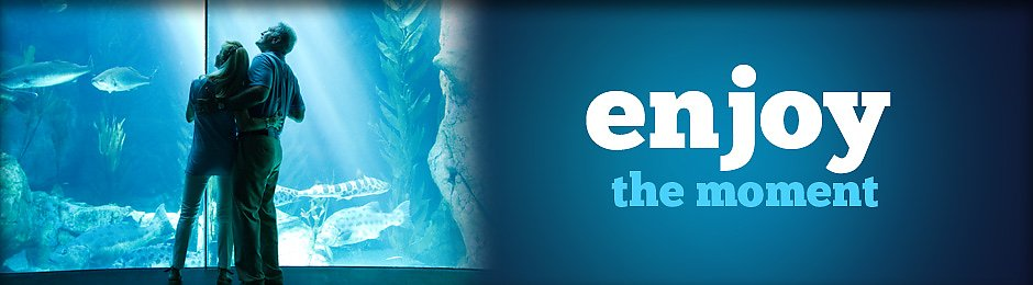 enjoy the moment at the aquarium - banner