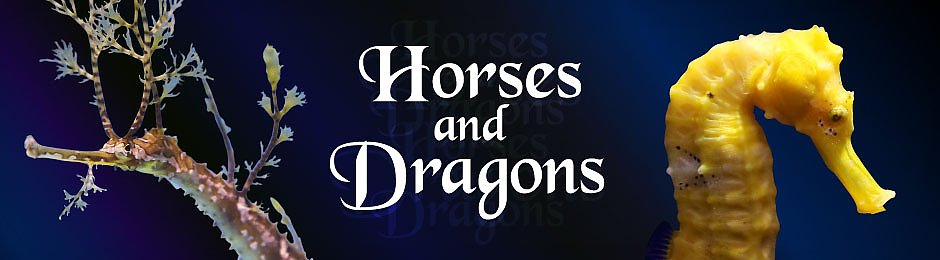 Horses and Dragons