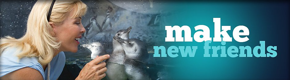 Make friends at the Aquarium - banner