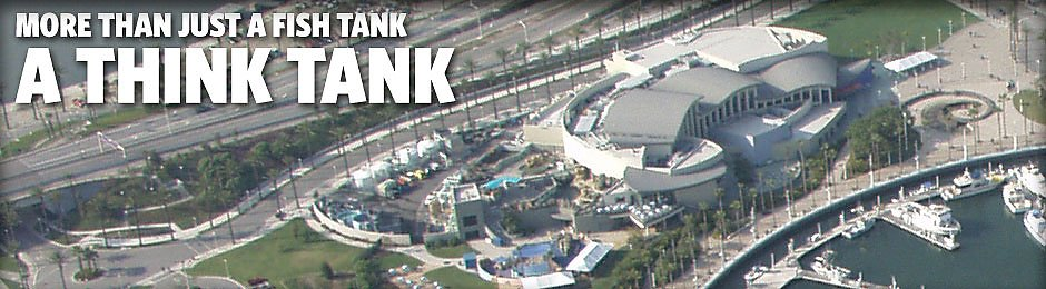 More Than Just a Fish Tank - A Think Tank - banner