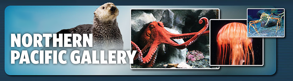 Northern Pacific Gallery - banner