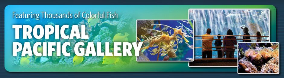 Tropical Pacific Gallery featuring thousands of colorful fish - banner