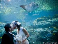 Bride and Groom kissing in front of exhibit with a ray swimming above - thumbnail