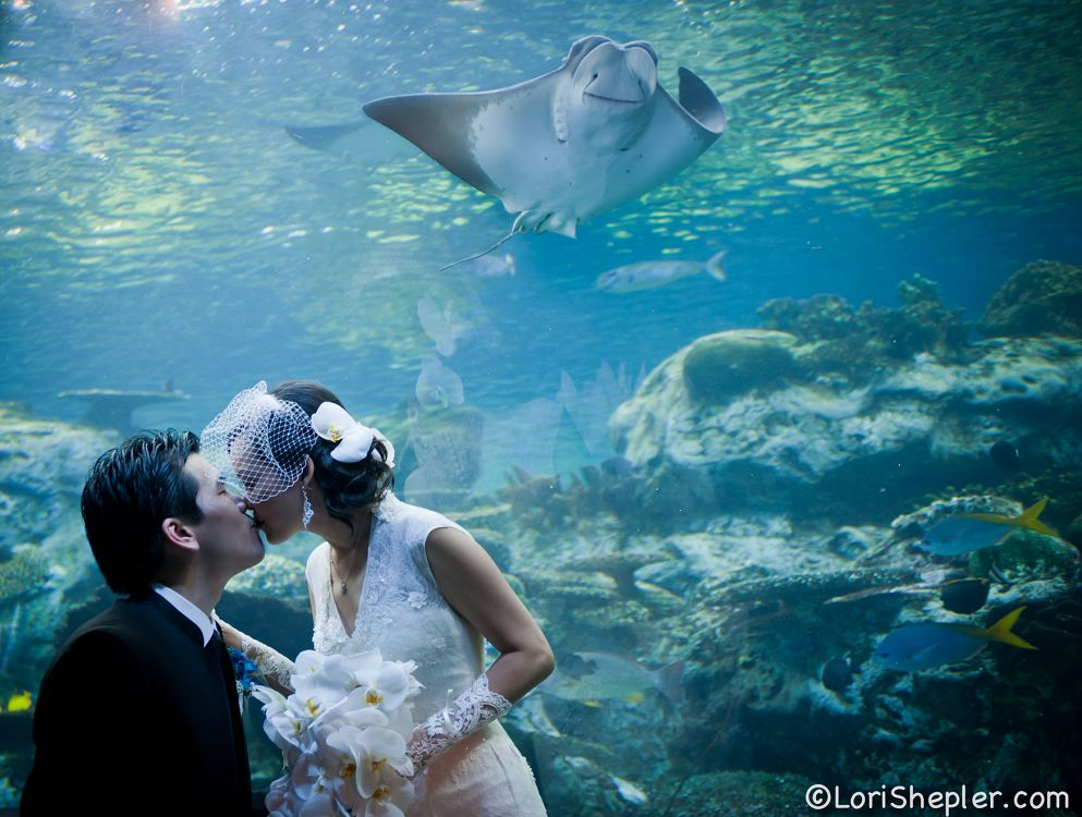 Bride and Groom kissing in front of exhibit with a ray swimming above - lightbox