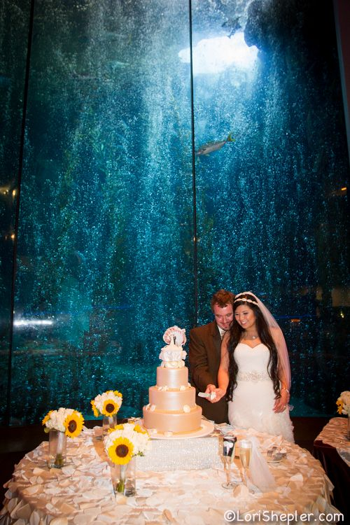 Bride and Groom cutting a cake in front of blue cavern exhibit - lightbox