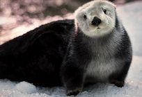 Otter links to Descuentos