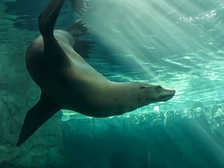 Milo the sea lion