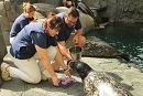 2017 Shelby Harbor Seal birthday links to Harbor Seal Shelby Celebrates 21st Birthday