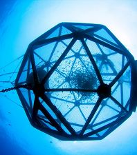 Learn About Sustainable Aquaculture at the Aquarium