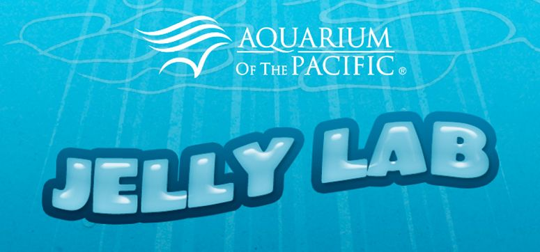 Raise Your Own Sea Jelly in New Jelly Lab App