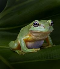 New FROGS Exhibits Now Open