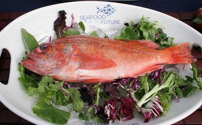 Rockfish Seafood for the Future