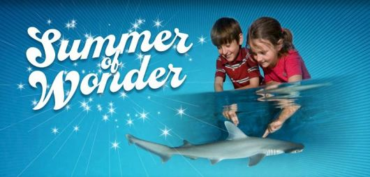 Summer of Wonder at the Aquarium