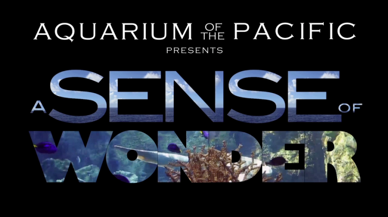 'A Sense of Wonder' Gives an Insider's Look at the Aquarium