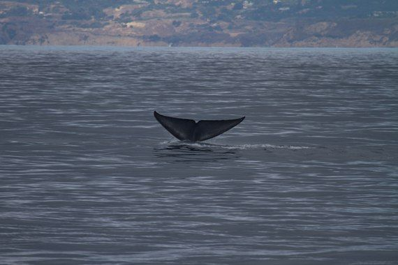 Aquarium Partnership with Whale Research Group Results in New Findings