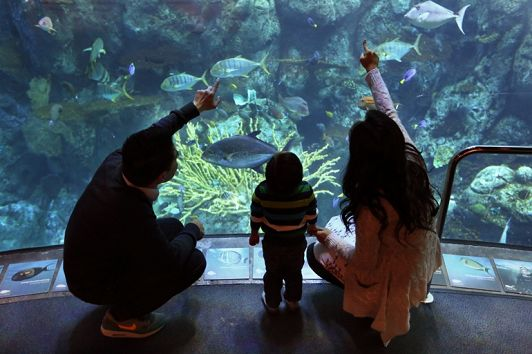 7 Things to Do at the Aquarium This Spring
