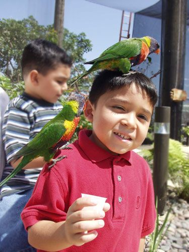 Lorikeets with Children - lightbox