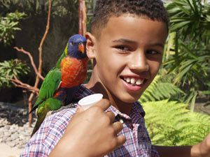 Aquarium of the Pacific Launches American Niño Contest