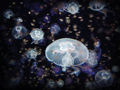 Saturday Family Fun: Sea Jellies