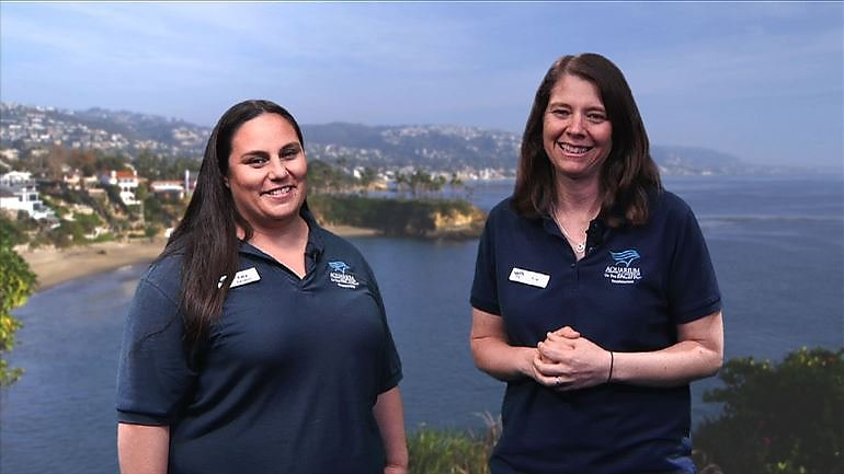 Aquarium Publishes Educational Career Videos With PBS