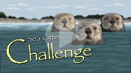 Sea Otter Challenge Interactive Game