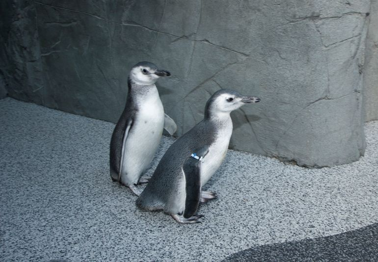 This Winter at the Aquarium