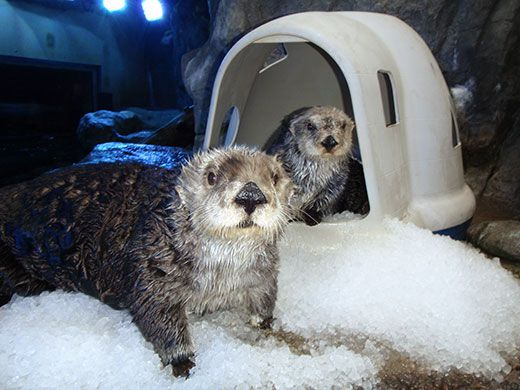 Aquarium Launches New Animal Care Wish List