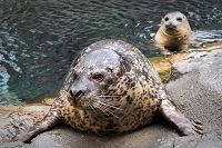 Links to Seals, Sea Lions, & Conservation