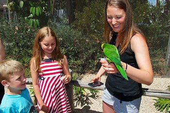 Young boy and girl smile as woman holding a nectar cup feeds the lorikeet perched on her wrist. - popup