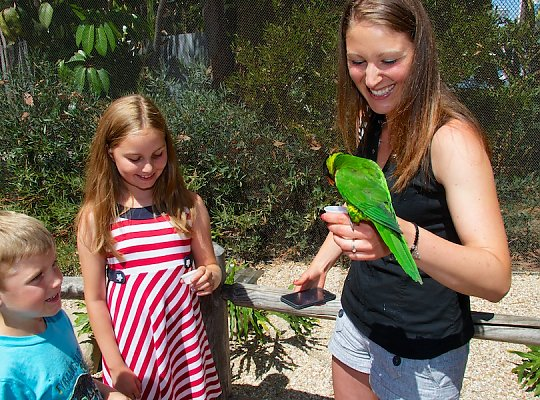 Young boy and girl smile as woman holding a nectar cup feeds the lorikeet perched on her wrist. - slideshow