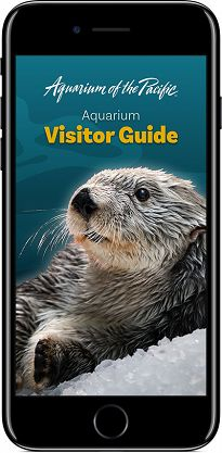 iPhone Visitor Guide Device Screen