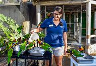 Aviculture volunteer with lorikeets