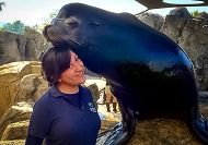 Large sea lions rests his head on smiling intern