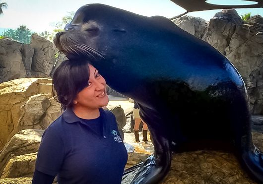 Large sea lions rests his head on smiling intern - popup