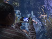Woman takes photo of an exhibit with her mobile phone