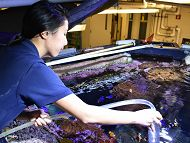 Staff member cleans an exhibit containing various tropical fish