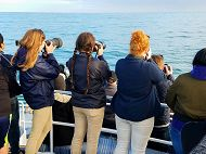 Whale watch with three people holding cameras links to Marine Mammal Photo ID Internship