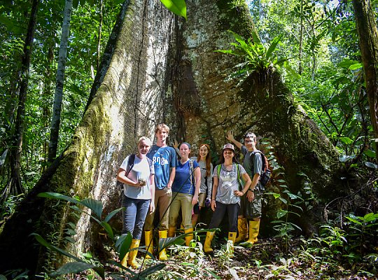 six people standing at the base of a large tree in the rainforest - slideshow
