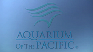 Aquarium of the Pacific PSA