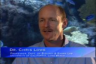 Chris Lowe - Shark Myths and Misconceptions