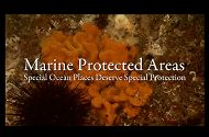 Marine Protected Areas: Special Ocean Places Deserve Special Protection