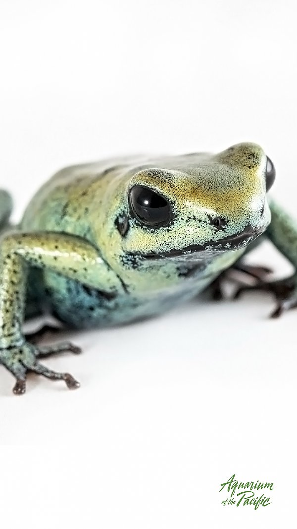 green frog with blue accents on white background